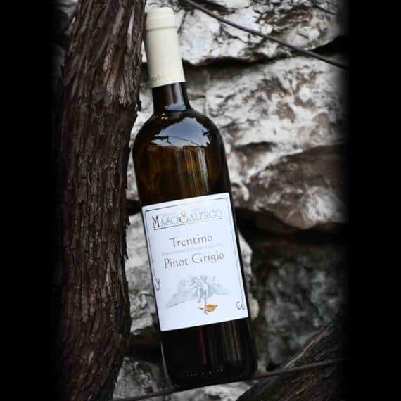Trentino D.O.C. Pinot grigio