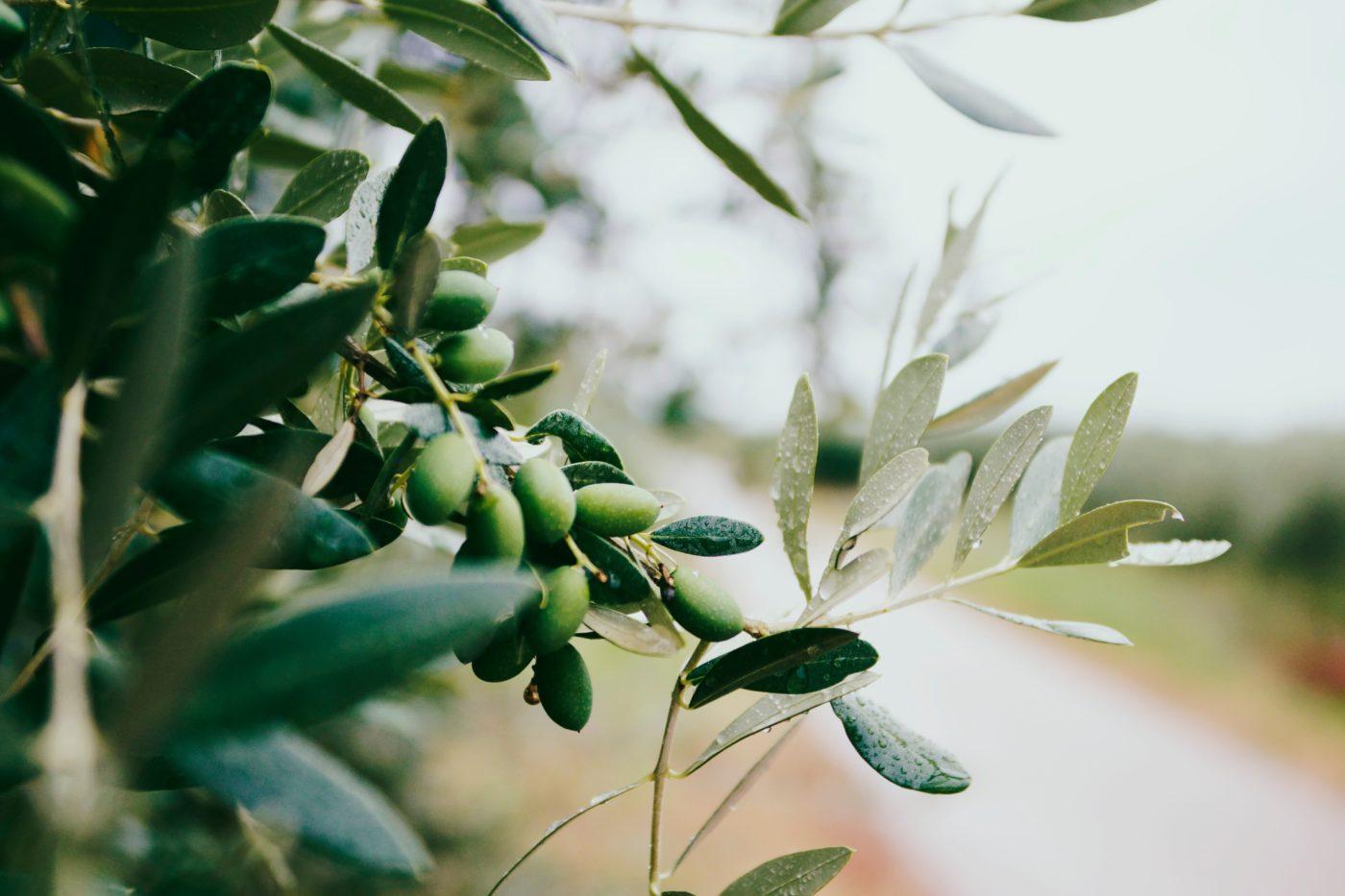 Olio extravergine d'oliva: i benefici per il dimagrimento.