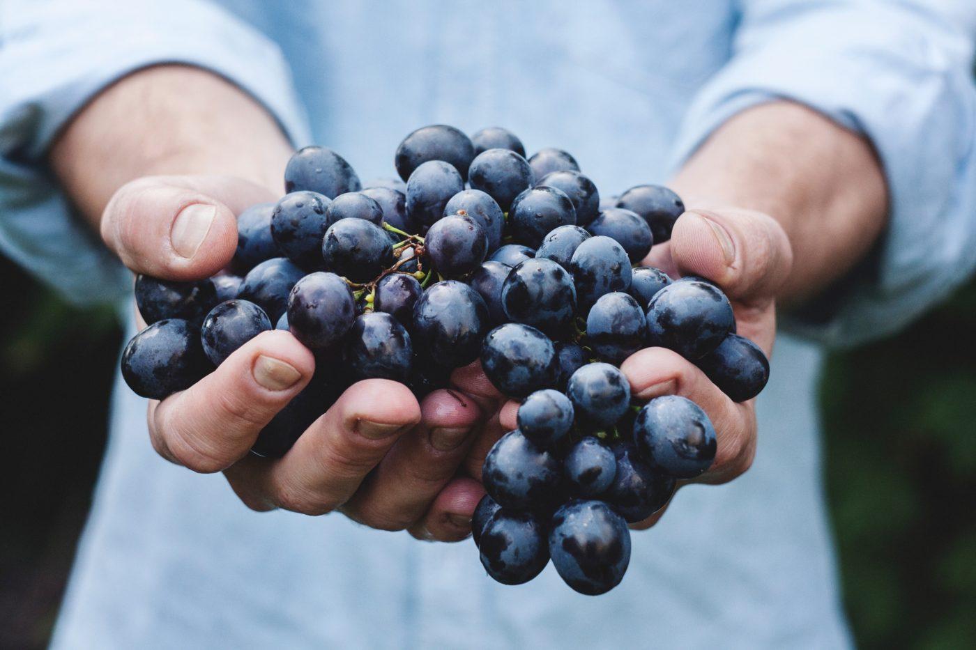 L'uva fragola, un dolcetto da balcone!
