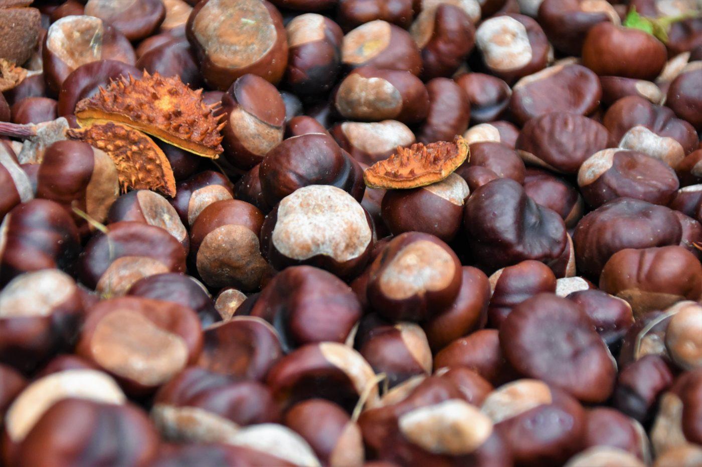 La farina di marroni, un ingrediente gustoso per dare il benvenuto all'autunno!