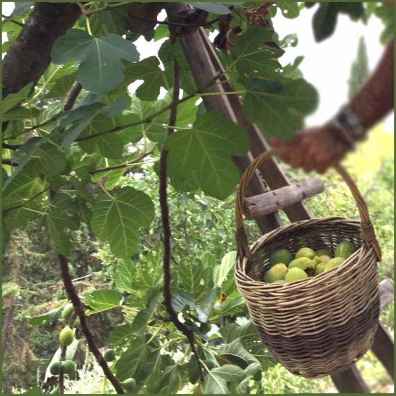 Confettura di fichi, mandorle e pistacchi